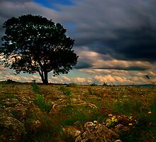 Lone Tree - Malham, North Yorkshire II by Andy Beattie