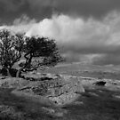 Wild Dartmoor by sbarnesphotos