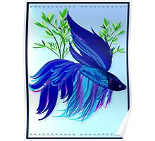 Big Blue Siamese Fighting Fish Poster
