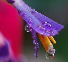 Bromeliad by Liz Worth