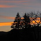 """Tress Silhouetted By Orange Sunset"" by dfrahm"