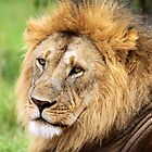 Golden Maned Lion by JenniferEllen