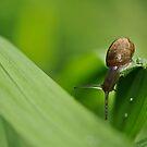 snail adventure by Tamara Cornell