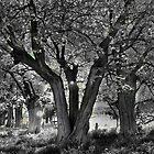 Trees at Huon, Lake Hume by Jenny Enever