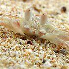 Crab-o-flage - Cape Range National Park, Western Australia by Dan & Emma Monceaux