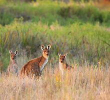 Kangaroo Family by Fiona Boundy