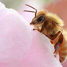 Honey Bee Break by David Kocherhans