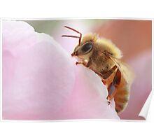 Honey Bee Break Poster