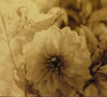 Vintage Flower 3 by Claire Elford
