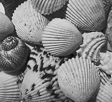 Shells 1 by marybedy
