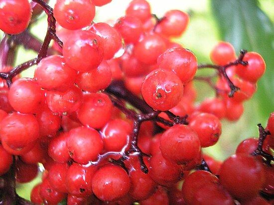 Wildberries by andreajansen
