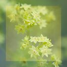 Lady's Mantle by Rachael Talibart