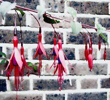 Tinkerbell Lanterns by Vanessa  Warren