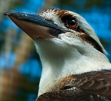 Where the Kookaburras Call  by Damienne Bingham