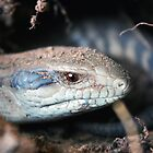 Juvenile Blue Tongue by Lars