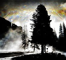 Treelight - Yosemite - Vintage by Matthew Floyd