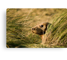 I've Been Spotted. Canvas Print
