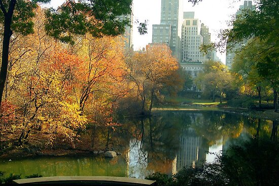 Central Park by Alberto  DeJesus