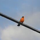 Robin On Wire by VixenFirepaw