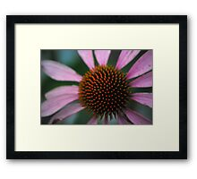 Spike Me Up With Echinacea Framed Print