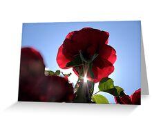 Backlit Rose Greeting Card