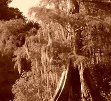 Sepia Cypress Reflections by Warren  Thompson