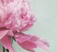 pale pink by Iris Lehnhardt