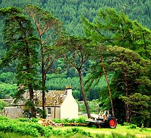 """""""HIGHLAND LIFE"""" by snapitnc"""