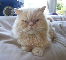 Grumpy Kitty by AnnDixon
