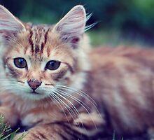 Kitten #1 by rebrabar