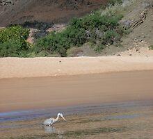 Galapagos Wildlife by Ccarter13