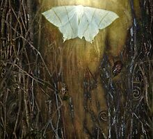 The Moon Moth led the way... by polly470