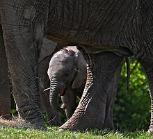 I dare you to try and take my stick from me! by Mark Hughes