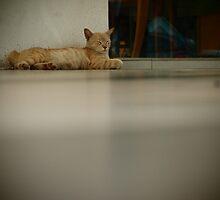 Take a Nap by withsun