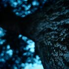 Moon Tree by withsun
