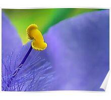 One Single Stamen: Spiderwort Poster