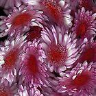 """Crysanthemum Swirl"" by Michelle Lee Willsmore"