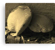 Mushrooms in Sepia - South Florida Canvas Print
