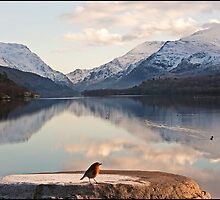From a robin's point of view Snowdonia Wales by almaalice