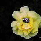 Garden Jewels by Gilberte