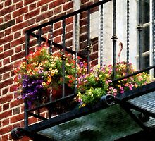 Hanging Basket on Fire Escape by Susan Savad
