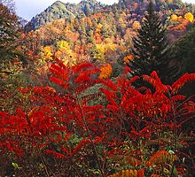 SUMAC BELOW THE CHIMNEY TOPS by Chuck Wickham