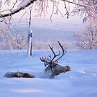 Reindeer at Sunrise by Honor Kyne