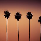The Palms 2 by Brent Disney