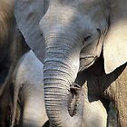 Lower Zambezi Baby Elephant by JenniferEllen