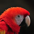 Gorgeous Redhead by Chris Ferrell