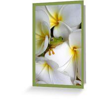 Frangipani Dreaming  Greeting Card