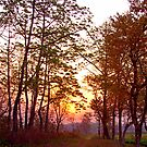 Assamese sunrise, Bansbari Jungle Lodge. by John Mitchell