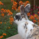 Mmmmm I Can smell the...Salvias? by Kassey Ankers