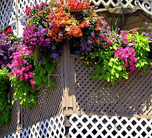 Blooming Balcony by RevJoc